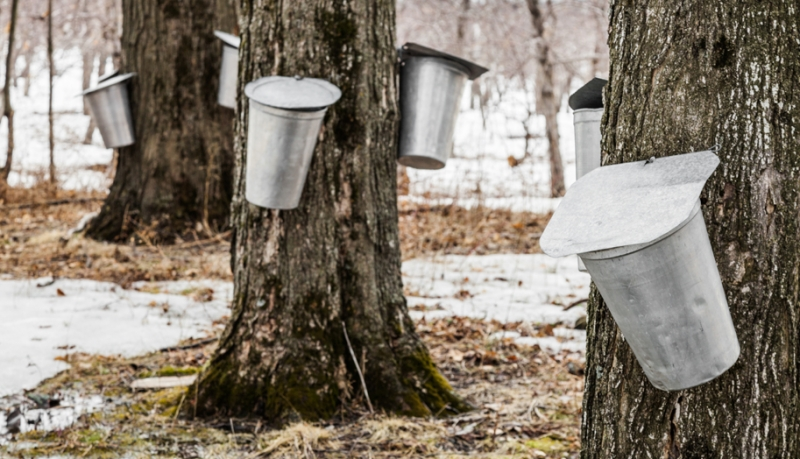Preparing for Maple Sugaring Season