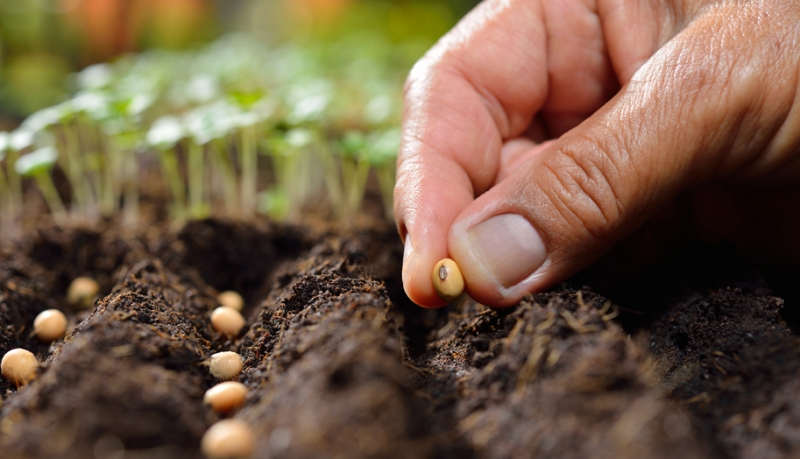 Getting a Jump on Spring Planting: Heirloom vs. Hybrid Vegetable Seeds