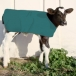 Insulated Calf Coat - Large Breed
