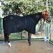 Classic Equine® Premium Polar Fleece Cooler