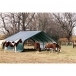 Shelter and Protection for horses