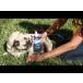 Vetericyn® Plus All Animal Wound & Skin Care Spray