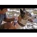 Vetericyn® Plus All Animal Ear Rinse