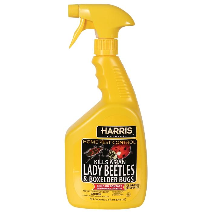 Asian Lady Beetle & Box Elder Killer