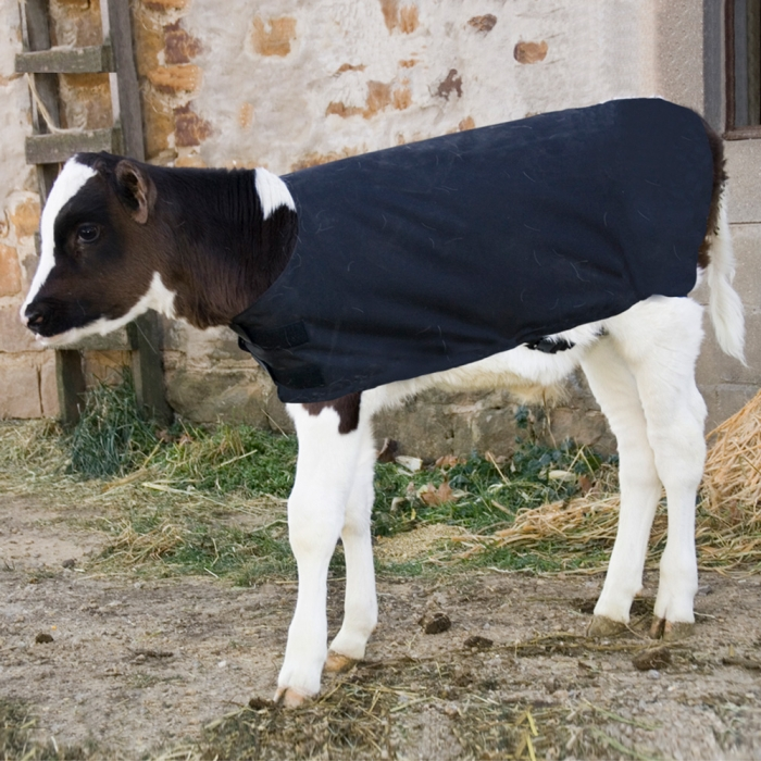Insulated Calf Coat - Small Breed