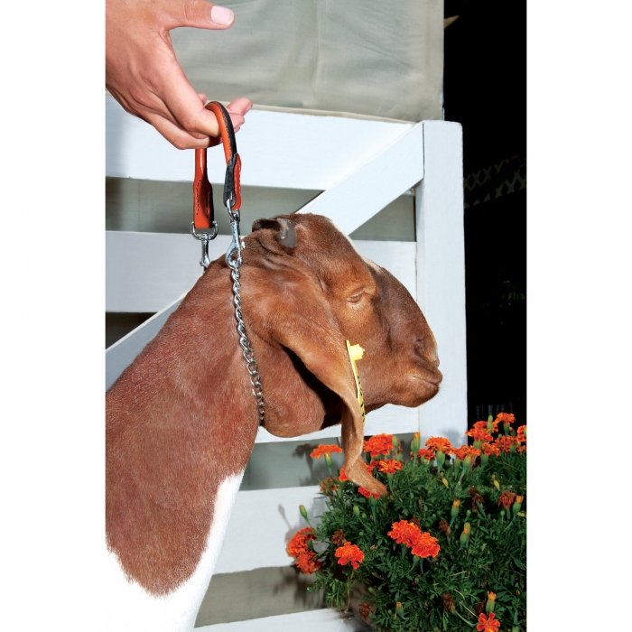 Leather/Chain 5/8 inch Goat Collar