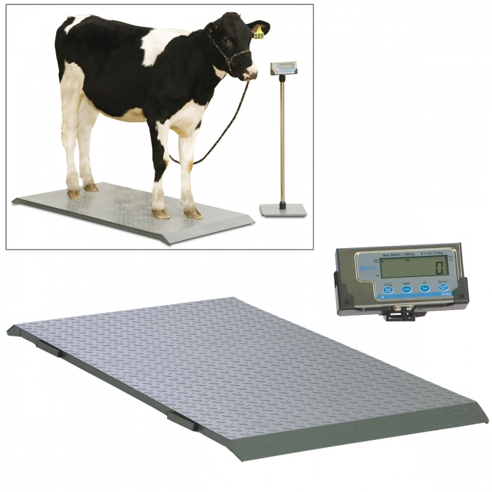 Salter Brecknell PS2000 Floor Scale with Indicator