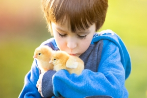 Bringing Home Your First Spring Chicks