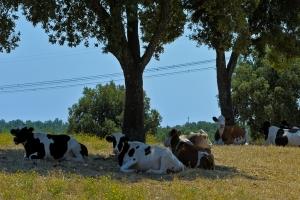 Keeping Livestock Cool