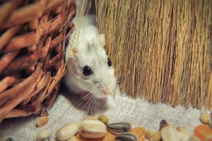 How to Keep Rodents out of Your House and Barn in Winter