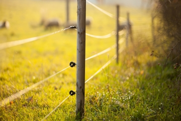 Electric Fence Repair for The New Farmer