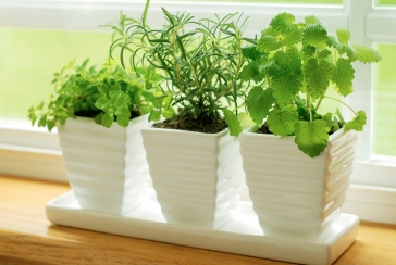 What You Need to Know About Growing Plants Indoors
