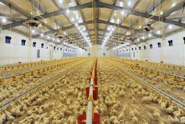 The Advantages of LED Lighting in Poultry Production