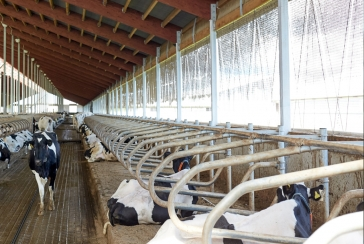 Selecting Livestock Curtains with Southwestern Sales