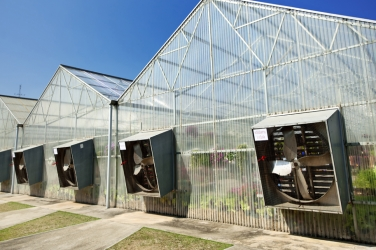 The Importance of Ventilating Your Greenhouse