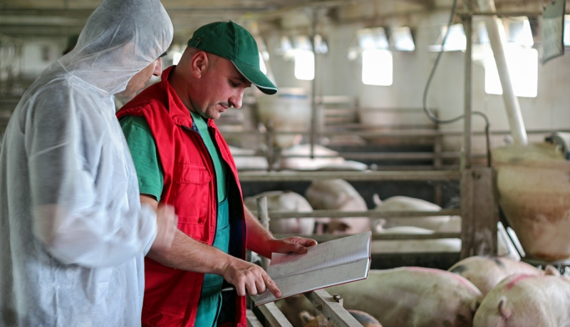 Protecting Pig Barn Workers from Infection