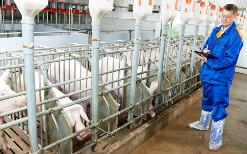 Benefits of Daily Pig Barn Inspections