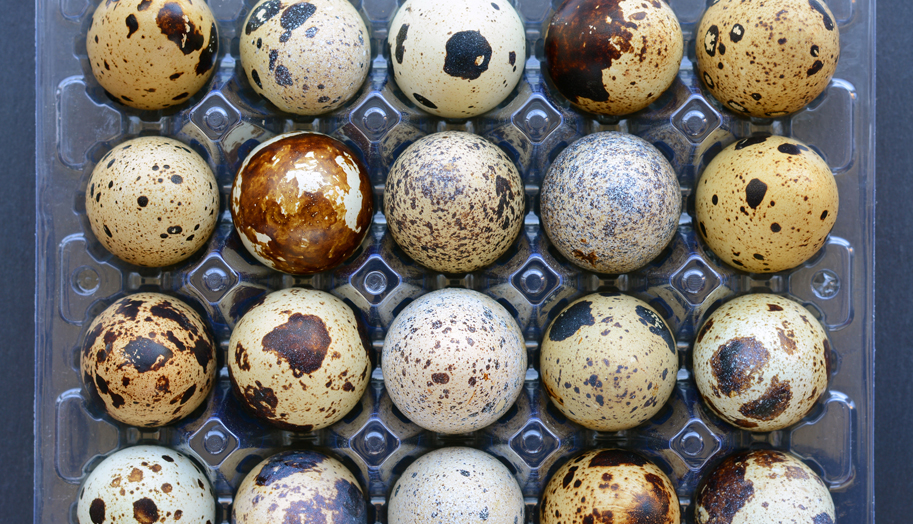 How to Incubate Large Quantities of Game Bird Eggs