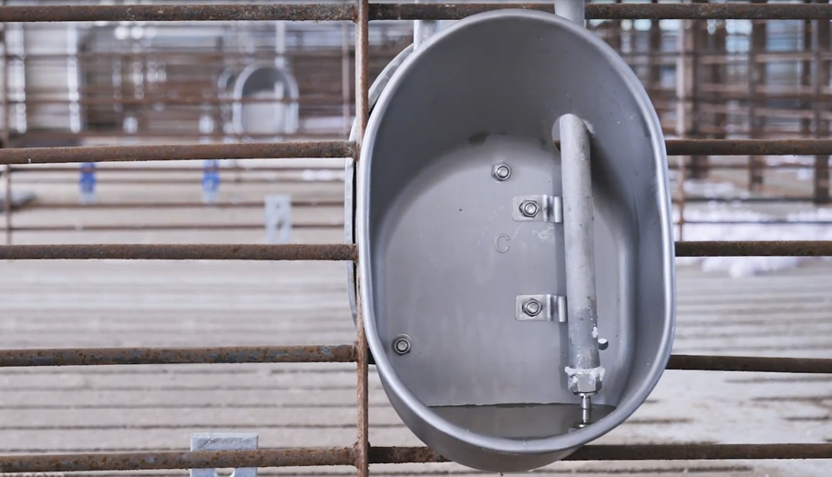 Advantages of The Swine Cup Watering System